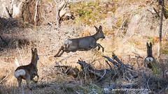 20170405104125 (koppomcolors) Tags: koppomcolors djur animal sweden sverige scandinavia
