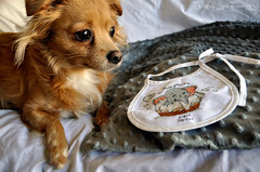 JuanAnnouncements-13 (TrishaLyn) Tags: crafts crossstitch bibs birthrecords dogs pomchi pomeranian chihuahua animals sanleandro california