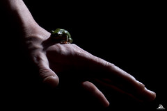 Low Key on Frog (Domi Art Photography) Tags: low key lowkey ombre lumiere clair obscur animal animals frog grenouille green black nature hand