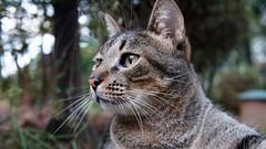 >^.^< (Rodrigo.80) Tags: cats gatos