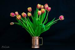 Tulips (Bob C Images) Tags: flowers tulips stilllife arrangement cooper mug
