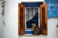 Cat in a window of Anafiotika, Athens (Nicolay Abril) Tags: athens greece αθηνα ελλάδα athènes grèce athen griechenland atene grecia atina yunanistan atenas