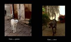Bellissimi (dona(bluesea)) Tags: cani dogs povero poor ricco rich