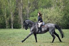 Galloping (dora.klenovszki) Tags: horseriding canter gallop horse