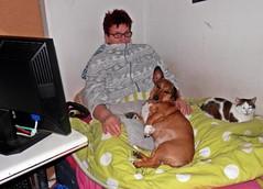 K640_P3045849 (emmendinger) Tags: bvb thomstuchel andyherzog peterkulpe silviakulpe indenreben tüv vogesen kapelle burglandeck tüvplakette vogesenblick hund frau reben riegelerbrauerei loftwohnungen martinskapelle vogesenmitschnee dbbahn dreisamundelzzusammenschluss schwäne schwan zug schwanenportrait elz katze bett schlafenderhund hundimbett katzeimbett mannambachufer mannaufbaumstamm fraumitbrille hochburg schneeglöckchen