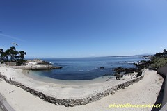 Lovers Point Park and Beach (Narwal) Tags: pacificgrove california ca usa 美國 加州 太平洋叢林 canon fisheye lens 15mm 魚眼 鏡頭 lovers point park beach