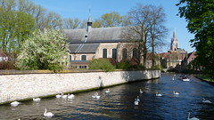 L1030960 (SeppoU) Tags: belgia belgium brugge turisti tourist näpsy snapshot huhtikuu april 2017 vesi water lintu bird joutsen swan leica vlux2
