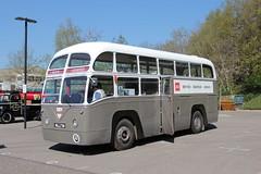 MLL738 BEA 1097 Brooklands (jc_snapper) Tags: bus aec aecregal parkroyal britisheuropeanairways bea mll738 brooklands londonbusmuseum regaliv preservedbus