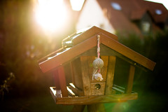 Birdhouse in garden at sunset light (thethomsn) Tags: birdhouse garden sunset light depthoffield dof flare germany warmth small building wood home closeup backlight