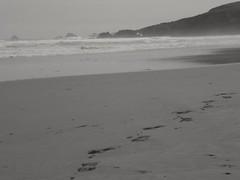 Pas.. Steps... (alainpere407) Tags: alainpere bretagne breizh brittany finistère penarbed presquîledecrozon beach plage oceanatlantique atlanticocean pas steps sable sand bretagneennoiretblanc