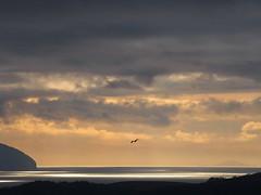 Be (Céanndhubahn) Tags: scotland islands sea clouds sundown seagull