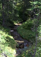 03-IMG_8389 (hemingwayfoto) Tags: österreich austria baum europa fichte fliesend hohetauern landschaft nationalpark natur naturschutzgebiet rauris rauriserurwald reise tannenbaum urwald wald wasser