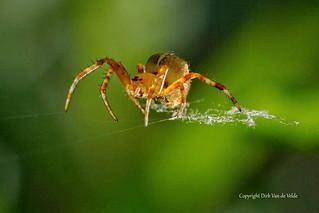 Spider on a wire