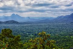 12/52 - Ben's Bluff (roijoy) Tags: 8801 bens bluff belize cockscomb wildlife nature reserve maya mountains victorias peak jungle