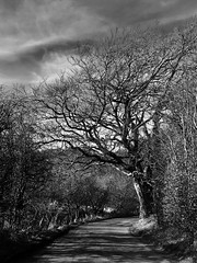 Near Palace Rigg Country Park Airdrie Scotland (frankhimself) Tags: clouds sky atmospheric lighting beautiful noiretblanc blackandwhite bw countryside lane road treeshot trees nature