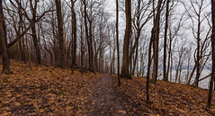 Along the RIver (Tony Webster) Tags: frontenac frontenacstatepark lakepepin minnesota mississippiriver earlyspring forest leaves spring statepark trees unitedstates us