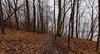 Along the RIver (Tony Webster) Tags: frontenac frontenacstatepark lakepepin minnesota mississippiriver earlyspring forest leaves spring statepark trees unitedstates us