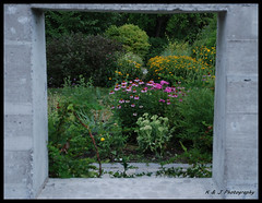 Frame of Flowers (KLF & JRN) Tags: kjphotography window windowframe frame cornflowers flower edwardsgardens scarboroughon nature garden green yellow pink concrete