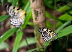 DSC_1532_LowRes (baileym925) Tags: lamesaecopark manila philippines qc nature