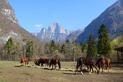 cavalli a Case Salet (Tabboz) Tags: montagna escursione valle cordevole fiume torrente ruscello cime panorama pascoli sentiero