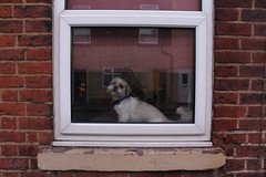 IMG_3886 (sloop.john.b.) Tags: window liverpool widnes dog reflection