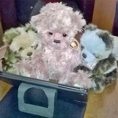 Gaming (zaramcaspurren) Tags: charliebears teddybear teddybears teddies softtoys softtoy stuffedtoy stuffedtoys stuffedanimal stuffedanimals plush plushtoy plushies plushtoys plushie