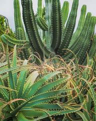 Cacti! Old Airport State Beach!!  Hawaii Island (ShutterOak) Tags: hawaii bigisland cactus green
