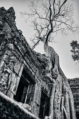 Ta Prohm (Uwe Printz) Tags: q tomb raider temple leica bw 20160102 kambodscha ta prohm architecture cambodia angkor siem reap travel leicaq siemreap taprohm tombraidertemple tombraider