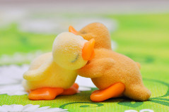 "Day 105/365 - ""Comfort"" (Little_squirrel) Tags: 365the2017edition 3652017 day135365 15may17 love hug duck cuddling ducks comfort colorful lovedones couple figures animals eastern together comfortable togetherforever friendship friends happiness happy"