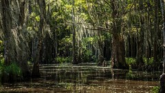 In the swamp (802701) Tags: creepy eerie outdoors louisiana neworleans swamptour swamp