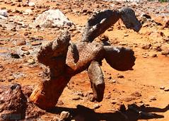 Scorched Hand (Mahmoud R Maheri) Tags: galapagos galapagosislands cactus heat desert naturereserve seymourisland ecuador pacificocean