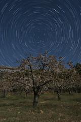 Noche de luna y estrellas (luisetegt) Tags: cerezos estrellas circumpolar noche nocturna madriddelascaderechas burgos