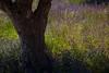 Nature's Canvas (Alicante, Spain 2013) (Alex Stoen) Tags: 5dmk2 alexstoen alexstoenphotography canon canoneos5dmarkii contrasts ef24105f4lisusm elcampello flickr flores flowers geotagged hike lespuntesdegosalvez mayday maydaypicnic naturalbeauty naturaleza nature outdoors pictoresque plants poetic romantic senderismo silvestre spain trail travel walk wild wilderness composicioncreativa creativecomposition facebook magiclight prado smugmug