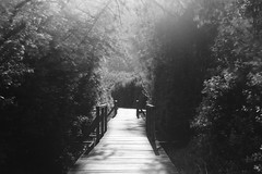 Light passage (Mi-Fo-to) Tags: caldaro lake passage light black white landscape lago italy paesaggio long exposure multiple tree alberi vegetazione pond passerella dsc08750 mifoto
