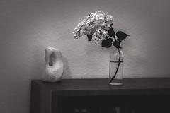 Flieder (Ralf Sternberg) Tags: bookshelf flower interior shelf stilllife bottle
