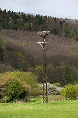 Storch Beobachtung (Kurt Hollstein) Tags: storch vogel draussen outdoor canon 5d tamron sp150600mm