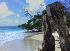 Bois (Pop626262 (Fort occupé)) Tags: freedom martinique mer antilles plage sable nuage ciel bleu bois eau iphone