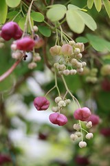 #Hobbyfotografie #Hobbyfotograf #Frühling #blüht #blickwinkel #Blüte #Blume #Spring #Flowers #rosa (nicolewenzel) Tags: hobbyfotografie hobbyfotograf frühling blüht blickwinkel blüte blume spring flowers rosa