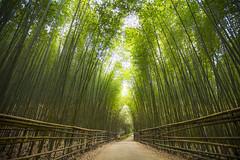 竹林の道 (Chia Hsien) Tags: 台灣 台湾 臺灣 taiwan 竹林 bambooforest bamboo forest quiet viridity asia canon canonef1635mmf28liiusm eos 5d4 outdoor road vegetation