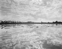 Clouds (emanuele_f) Tags: clouds ricefield paddy landscape reflection risaia novara mamiya press mamiyapress sekor 50mm f63 6x9 fomapan100 rodinal r09 150 blackandwhite biancoenero film analog