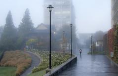 Heading to work on a holiday (Ian@NZFlickr) Tags: oatgo uni university vasity fog mist castle street anzac day student autumn fall dunedin nz