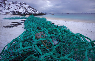 Marine litter. Trawl net with remains of entangled birds