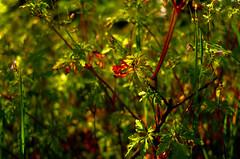(fernando.barcia) Tags: natureza ferrol ferrolterra galicia leica