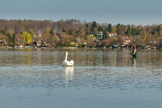 The Fisherman And The Swan
