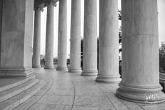 600_5479 (VMP photography) Tags: sakura washington cherryblossom tree travel capitol usa united unitedstates landmarks monuments jefferson lincoln