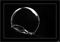 De piel fina (V- strom) Tags: byn bw macrophotography macros nikon nikon105mm nikon50mm nikon2470 burbuja bubble negro black concepto concept
