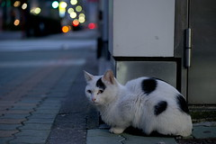 My memory (H2@Japan) Tags: japan cat tokyo town nikon downtown kitty    straycat