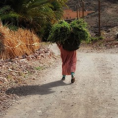 everyday life (s@brina) Tags: travel woman explore marocco hardwork oasisdefint
