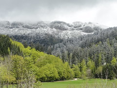 New snow fall in the Alps - End of May (Hlne_D) Tags: park cloud snow plant france alps tree green fog alpes grenoble plante landscape vert neige nuage paysage arbre parc brouillard alongtheroad isre rhnealpes parcnaturelrgionalduvercors coldelacroixhaute pnrvercors hlned croixhaute coldefau