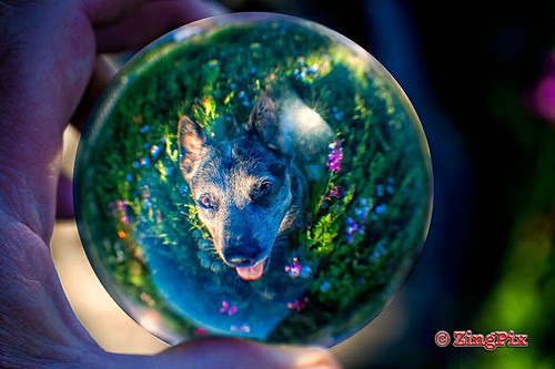 Dot the ACD in a Glass Sphere_MG_8171w